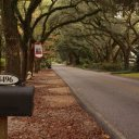 A beautiful spanish moss oak lined street, Magnolia Springs