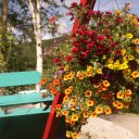 Summertime flowers at Chena Hot Springs