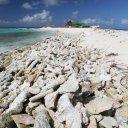 anguilla-sandy-island-11
