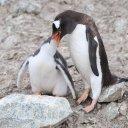 antarctica-oceanwide-expeditions-226