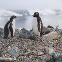 antarctica-oceanwide-expeditions-228
