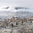 antarctica-oceanwide-expeditions-237