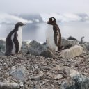 antarctica-oceanwide-expeditions-29