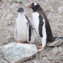 antarctica-oceanwide-expeditions-31