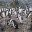 antarctica-oceanwide-expeditions-61