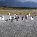 beagle-channel-ushuaia-3