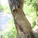 winslow-sedona-flagstaff-arizona-11