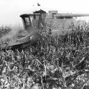 Corn harvest season near the Mississippi River