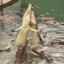 croc-cage-death-reptile-2