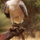 raptor-domain-kangaroo-island