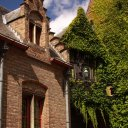 Picturesque ivy on Bruge buildings