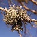 lahema-national-park-lichen