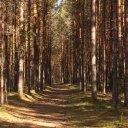 lahema-national-park-trees