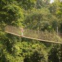 Lone-hike-along-part-of-the-Kakum-Rainforest-walk
