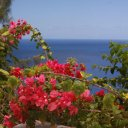 Bougainvillea-overlooking-the-beautiful-blue-of-the-Pacific-Ocean