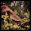 elephant-swaziland