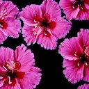 flowers-thailand