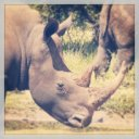 rhino-kruger-national-park