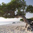aruba-caribbean-2_1
