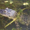 jean-lafitte-swamp-tour-7