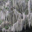 jean-lafitte-swamp-tour-9