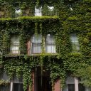 Summer green ivy has not left much of the facade of this Beacon Hill house