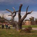 The Angel Tree, Bay St. Louis