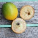 abiu-fruit
