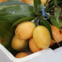 marian-plum-maprang-thailand