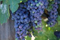 San Luis Obispo, CA – Wine
