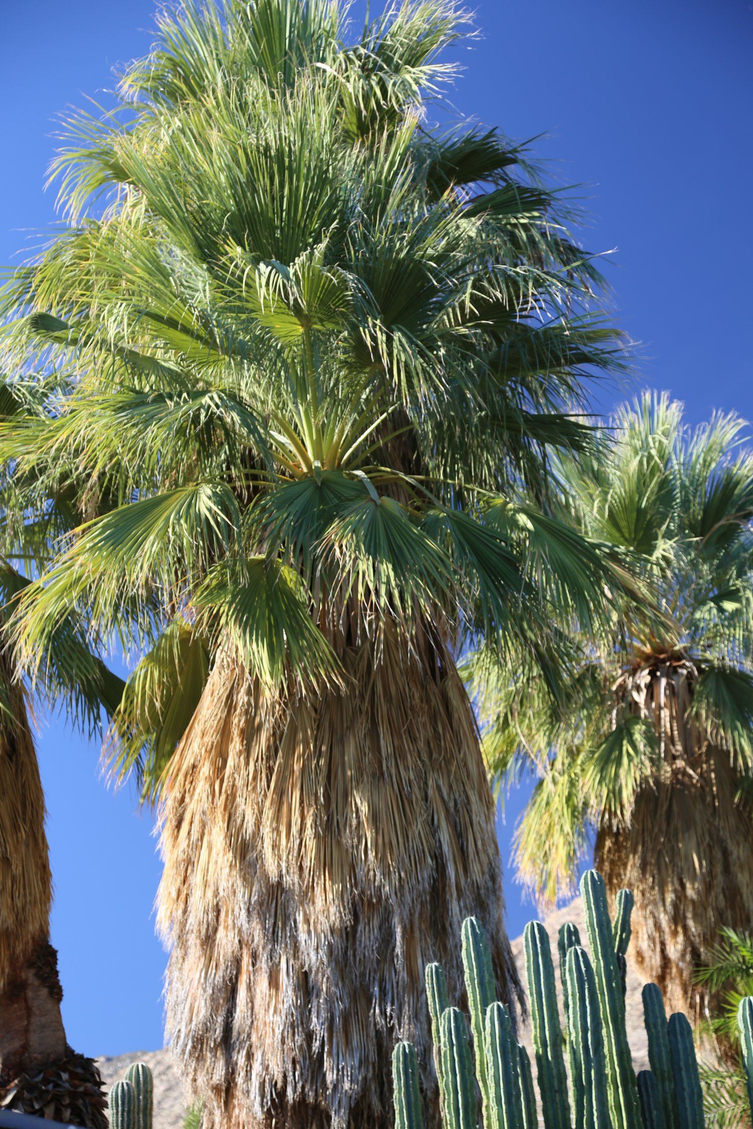Guides - Palm Springs, CA - Attractions - Dave\'s Travel Corner