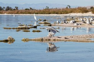 salton-sea-california