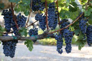 los-olivos-santa-ynez-wine-2
