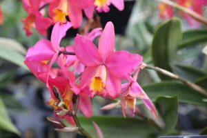 orchids-santa-barbara-1