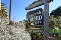 Santa Barbara, CA – Orchids