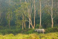 Nepal – Chitwan National Park