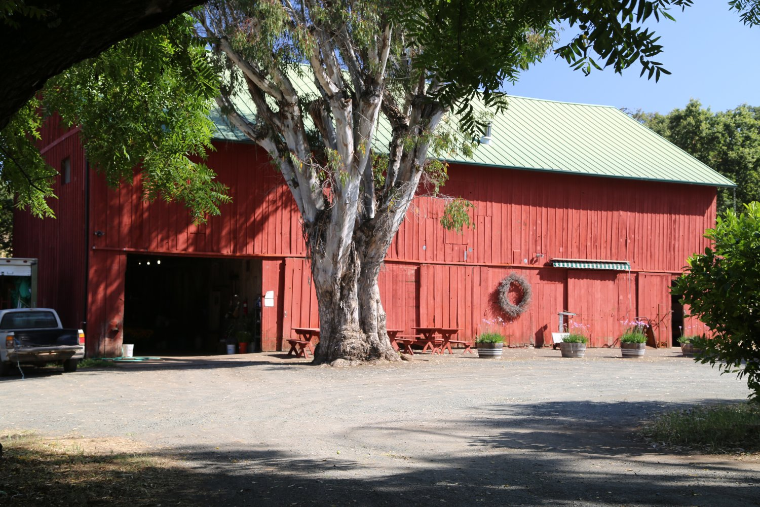 Pear Man Is Located Off Of Nielsen Road Off Of Chanate Road Just Down From  Sutter Hospital (the Old Community Hospital). This Small Bartlett Pear  Orchard Is ...