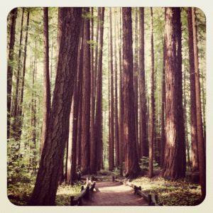 armstrong-redwoods