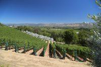San Francisco, CA – Napa Wine Tasting