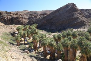 indian-canyons-palm-springs-11