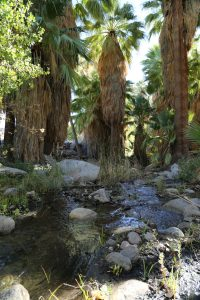 indian-canyons-palm-springs-8
