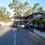 Del-Monte-Pines-Monterey  (1)