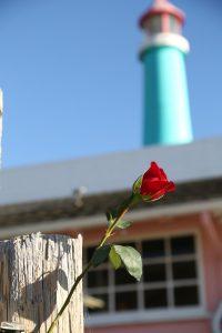 Rose-Fishermans-Wharf-Monterey
