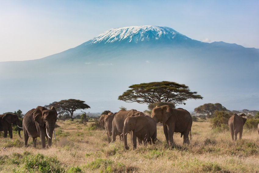 Kili-Elephants