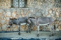 Lamu, Kenya – More Info