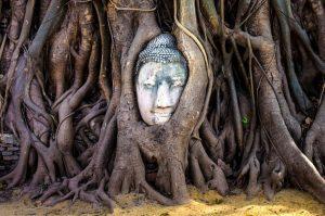 ayuttaya-buddha-head-tree