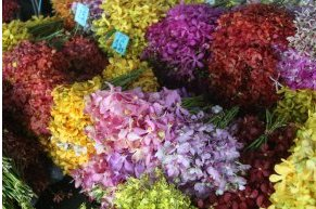 bangkok-flowers (2)