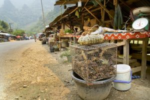 Alive Crab in Laos Local Market, around Vang Vieng
