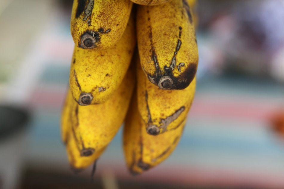 bali-bananas