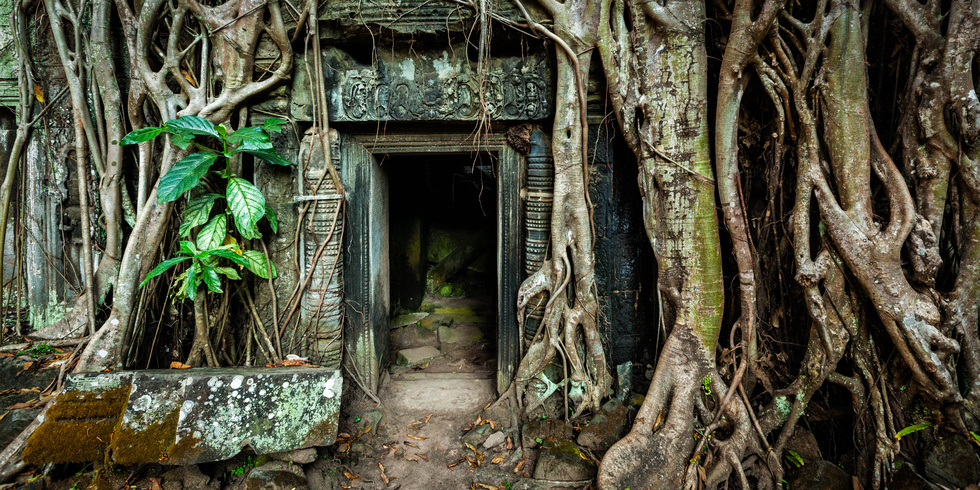 Ancient stone door and tree roots, Ta Prohm temple
